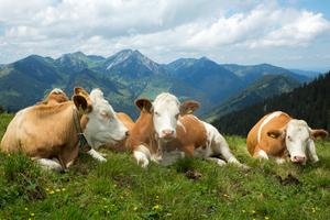 Bio, Tierwohl und Nachhaltigkeit in der Gemeinschaftsverpflegung von großen Betrieben? Geht das?